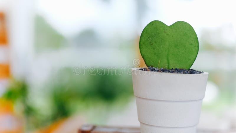 Mały kaktus z kierowym kształtem zdjęcie royalty free