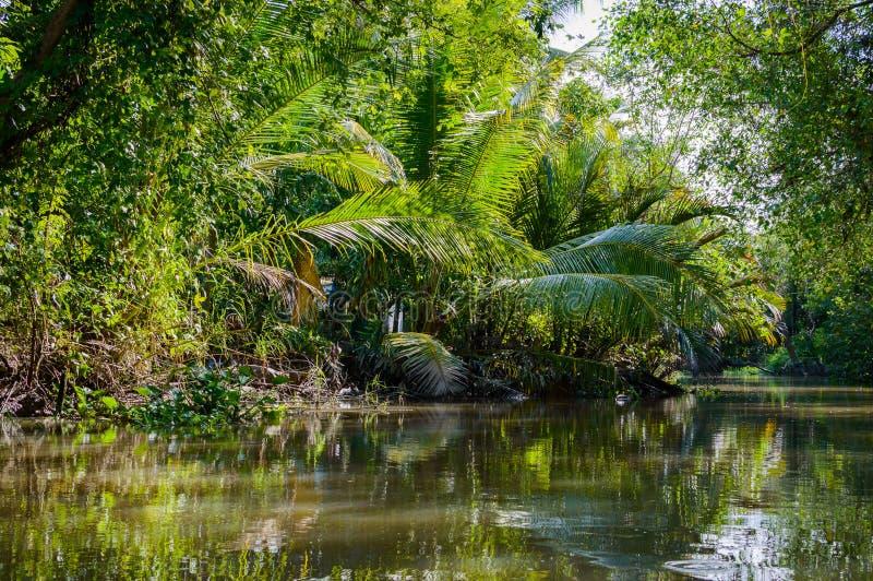 Mały kanał w Mekong delcie zdjęcie stock