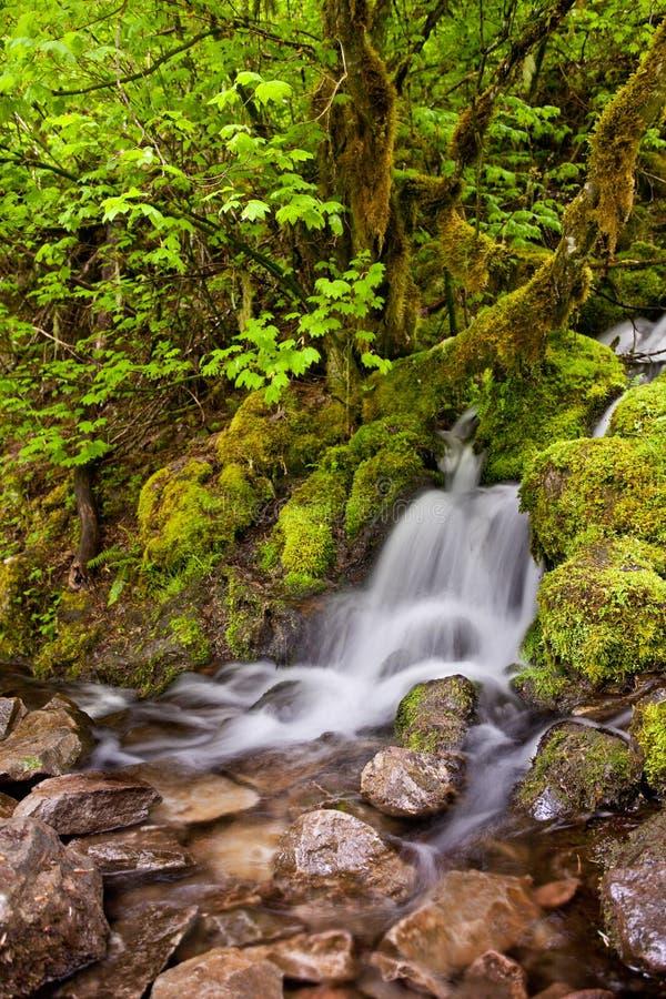 Mały kaskadowy siklawy spływanie w skały obraz stock