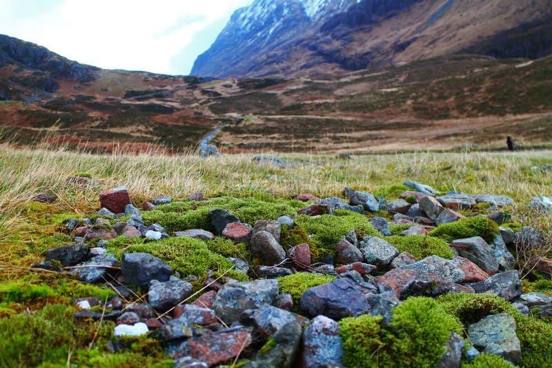 Mały kawałek urocza tundra zdjęcia royalty free