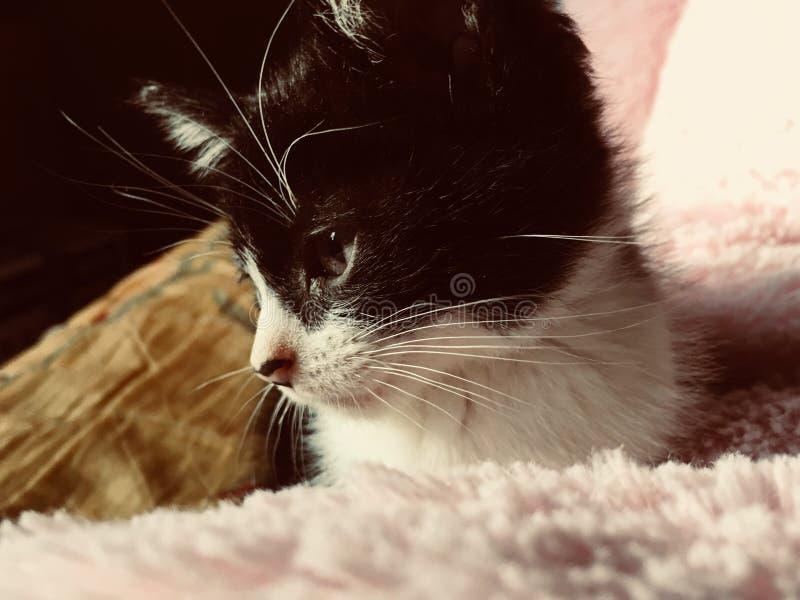 Mały kot patrzeje nic obrazy stock