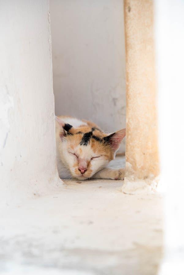 Mały kota dosypianie fotografia royalty free