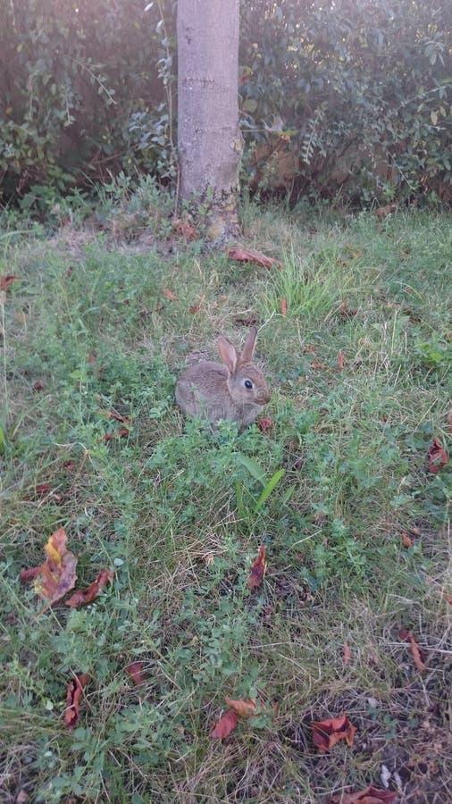 Mały królik fotografia royalty free