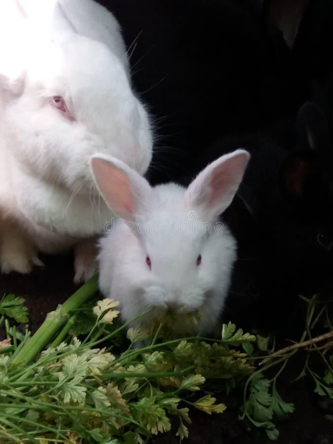 Mały królik i jej mama ma śniadanie obrazy stock