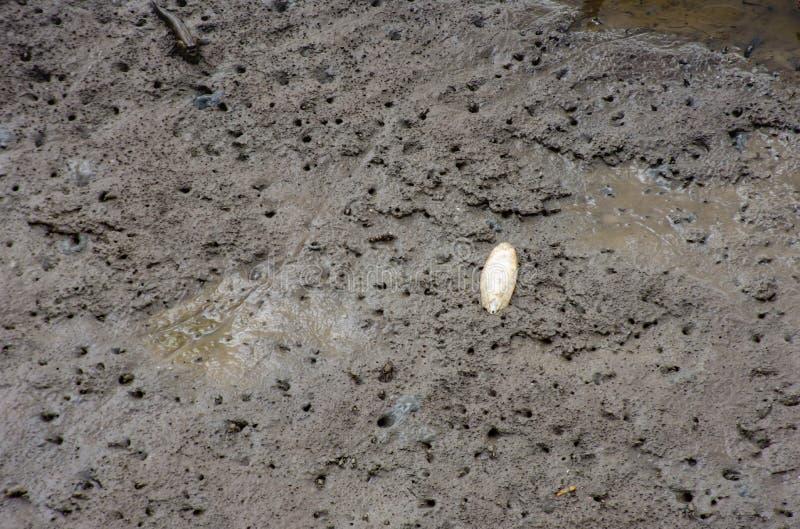 Mały krab w morzu przy uderzeniem Poo, Samut Prakan zdjęcie royalty free