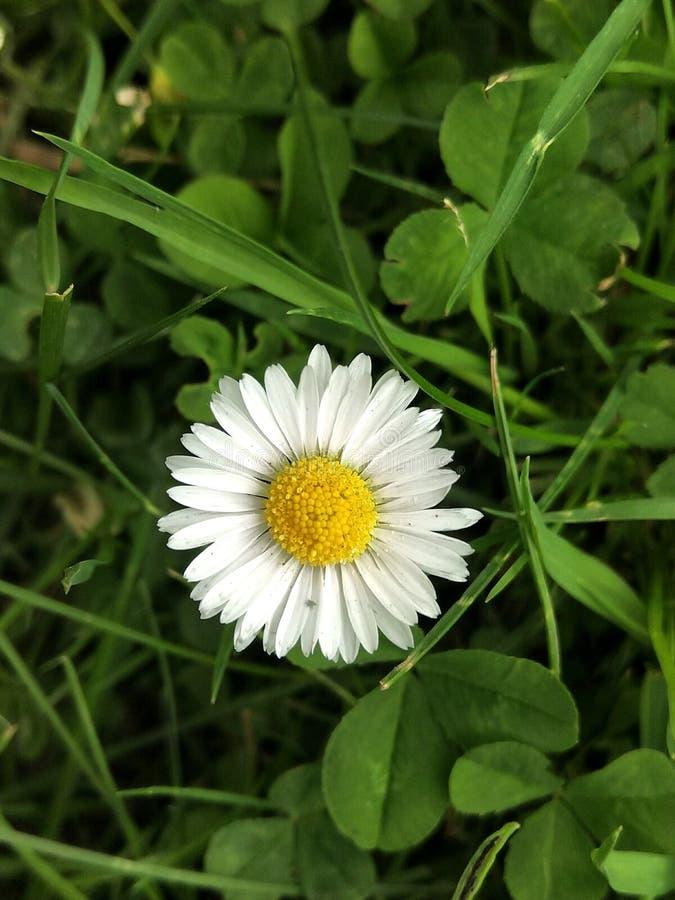 Mały kwiat obraz royalty free