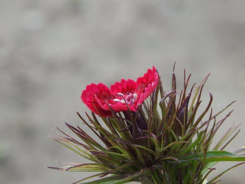 Mały kwiat po środku nigdzie zdjęcie royalty free
