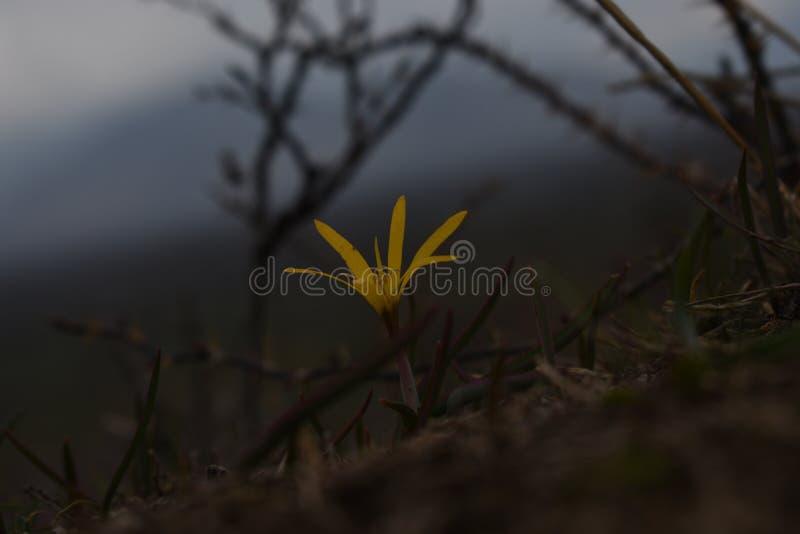Mały kwiatu dorośnięcie up fotografia stock