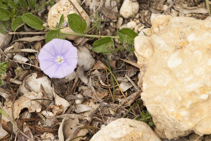 Download Mały kwiatu fiołek zdjęcie stock. Obraz złożonej z purpury - 53793006