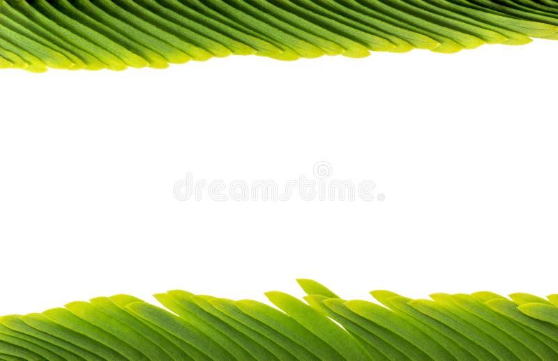 mały liści, fotografia stock