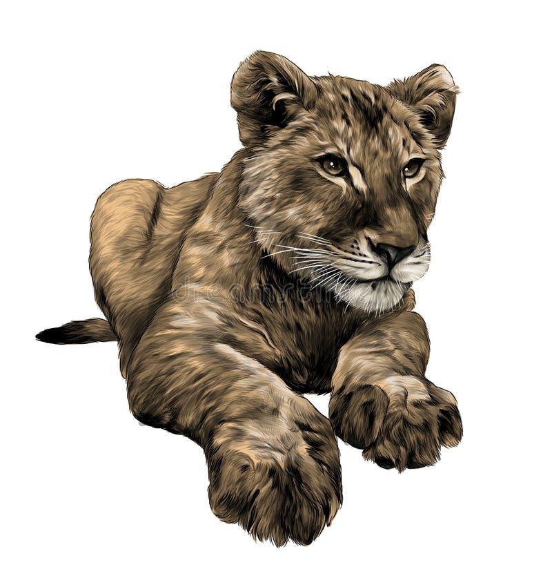 mały lwa lisiątko kłama pełnego długość rysunek ilustracji