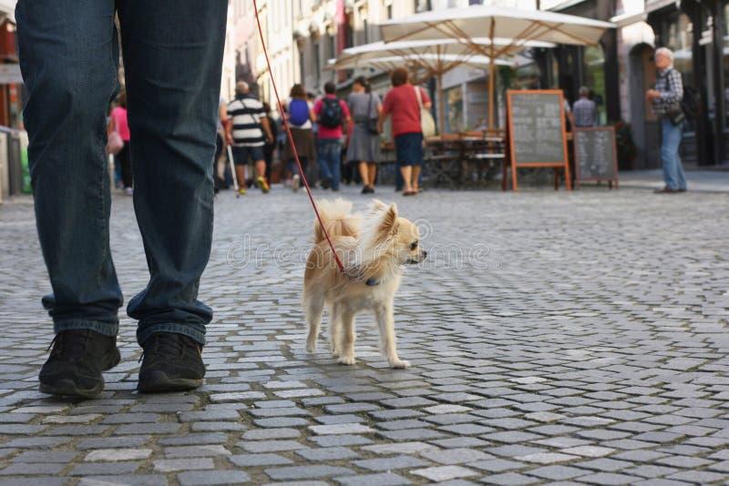 Mały miasto pies obrazy royalty free
