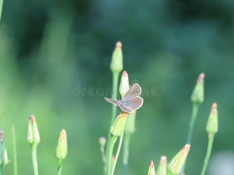 Mały motyl na roślinie zdjęcia royalty free