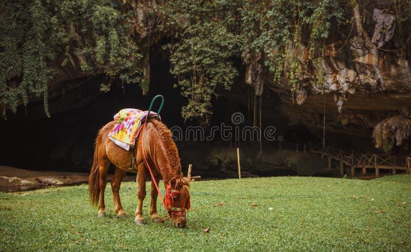 Mały muła pasanie na zielonym paśniku przy wejściem Lod jama zdjęcia stock