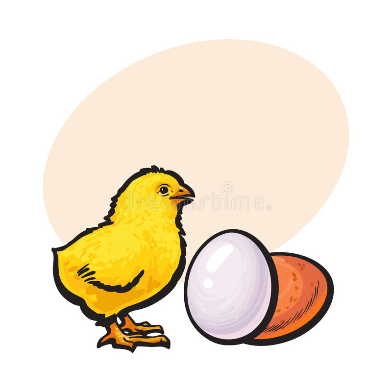 Mały nowonarodzony kurczak i cały brown jajko, nakreślenie wektoru ilustracja ilustracji