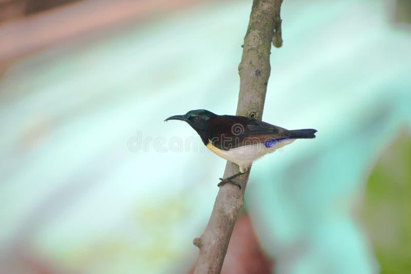 mały nucić ptasi obsiadanie na gałąź drzewo zdjęcia stock