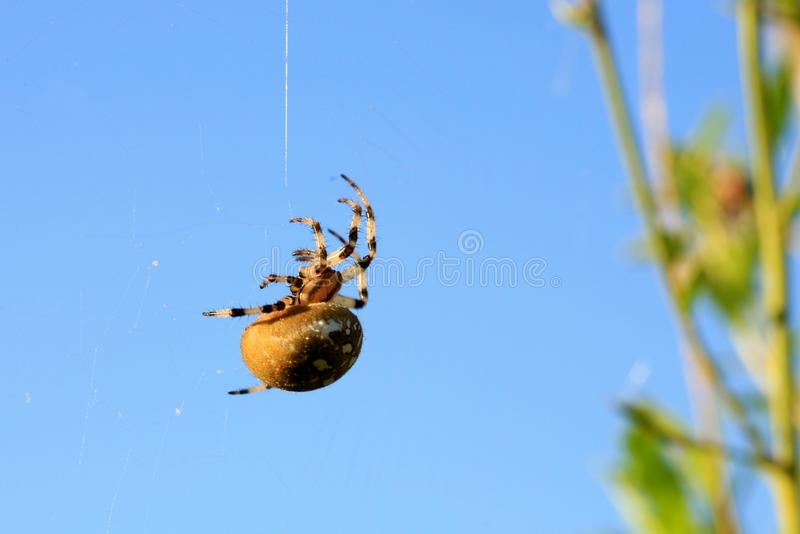 mały pajączku zdjęcie royalty free