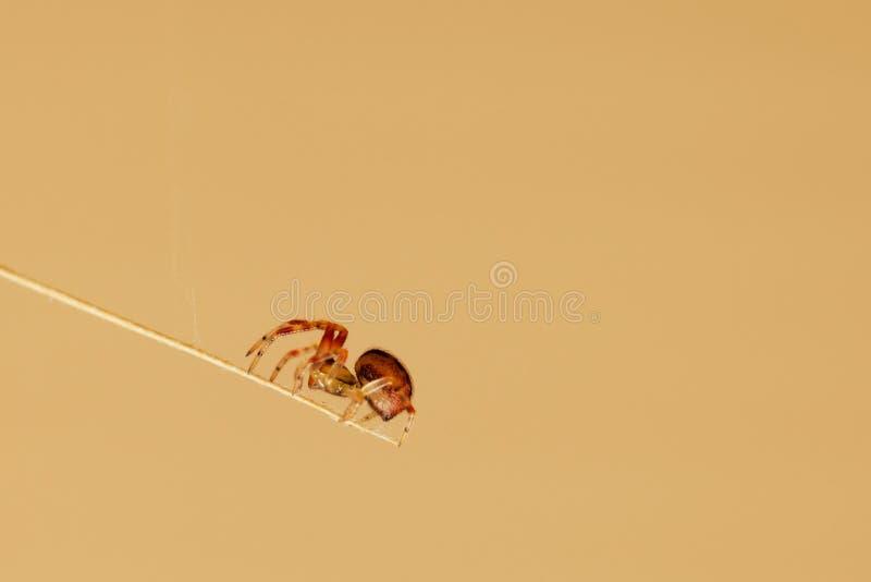 mały pająk zdjęcia stock