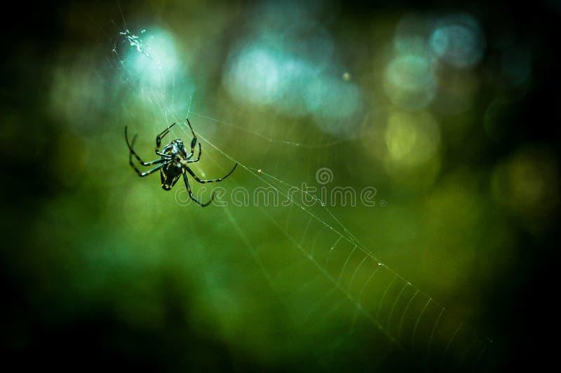 mały pająk obraz stock