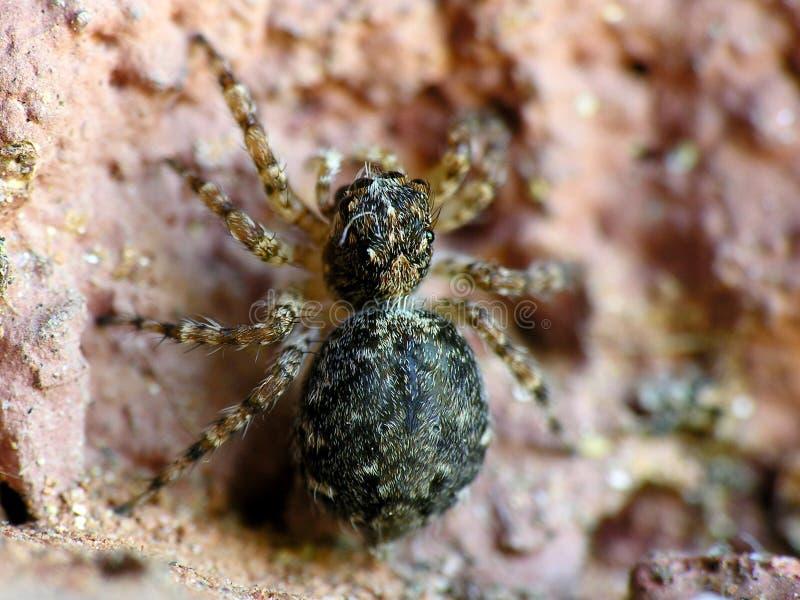 mały pająk fotografia royalty free