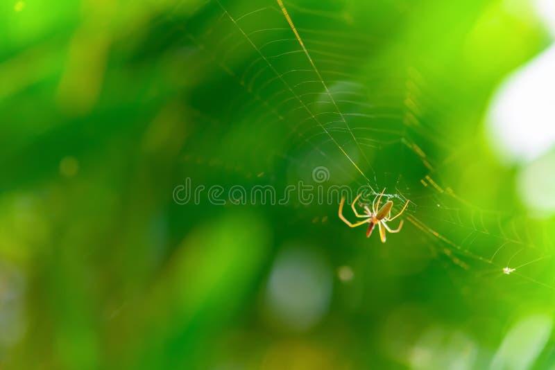 Mały pająk na sieci obrazy royalty free