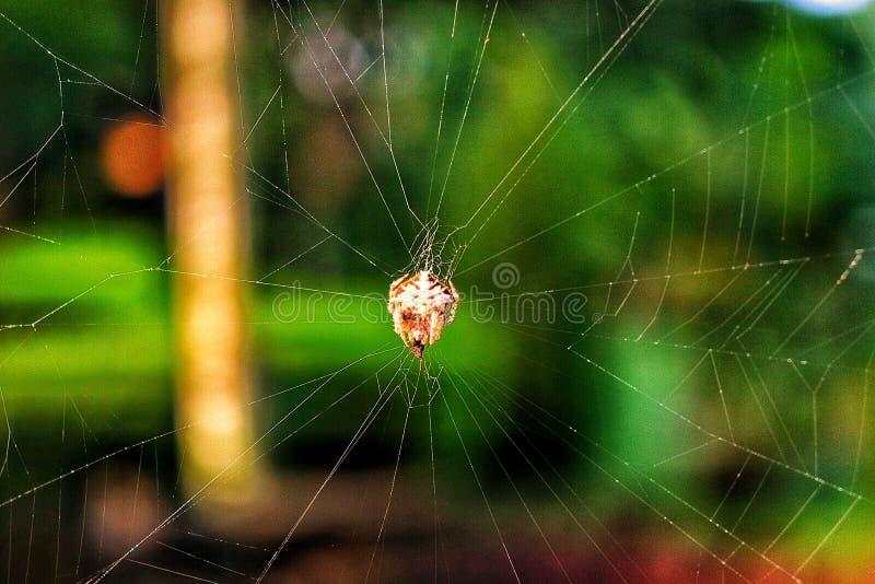 Mały pająk z nimi włókno dom zdjęcie royalty free