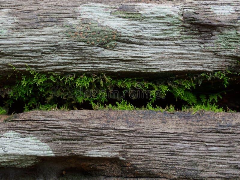 Mały paprociowy dorośnięcie wśrodku pęknięcia beli ławka w parku z drewnianą teksturą w roczniku i grunge projektujemy obrazy royalty free