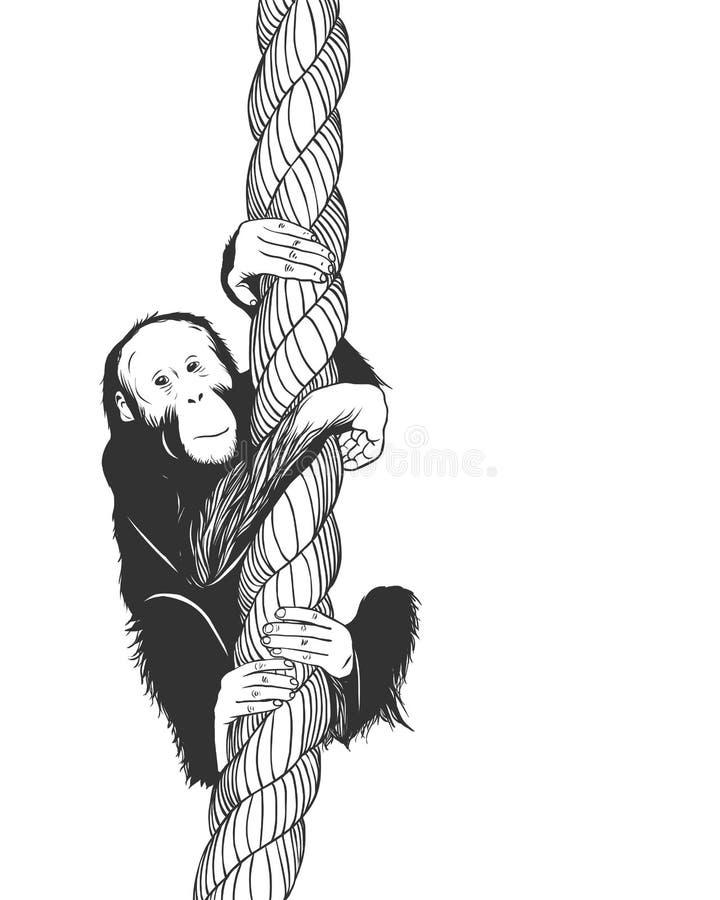 Mały pawian małpy chlanie na arkanie royalty ilustracja
