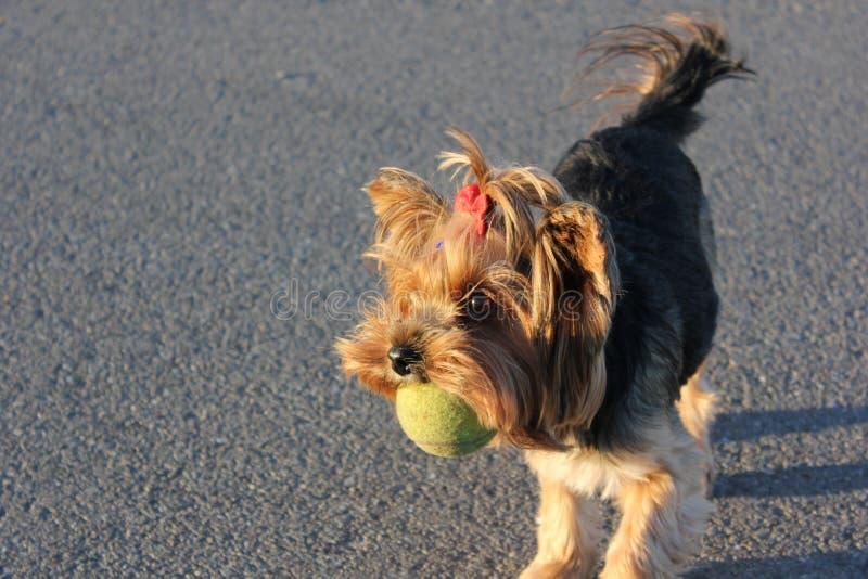 mały pies obrazy stock