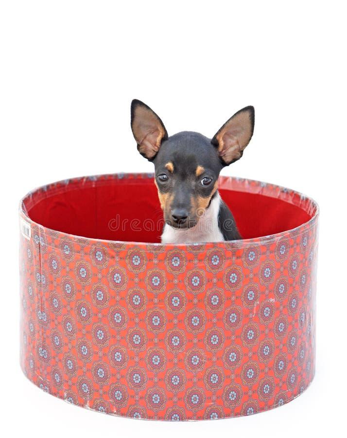 mały pies fotografia stock