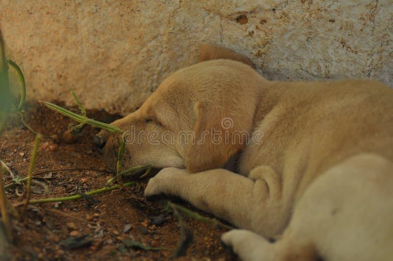 mały pies obraz royalty free