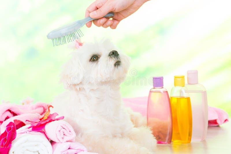 Mały pies przy zdrojem obraz royalty free