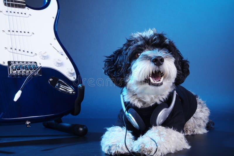 Mały pies z hełmofonami i gitarą zdjęcie stock
