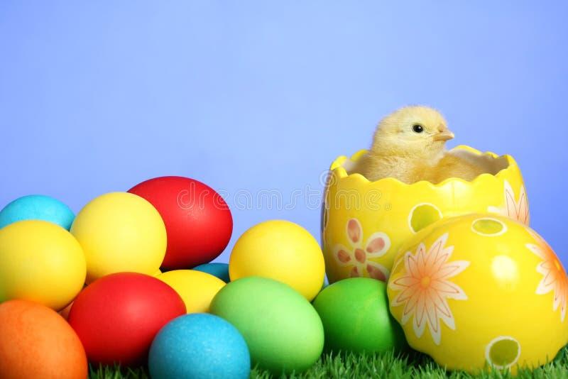 mały pisklęcy Easter zdjęcia royalty free