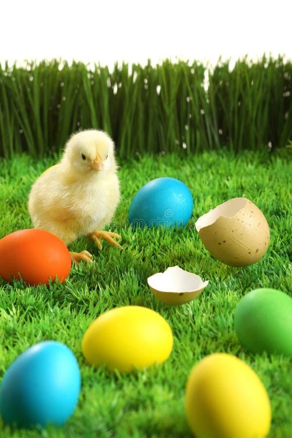 mały pisklęcy Easter fotografia stock
