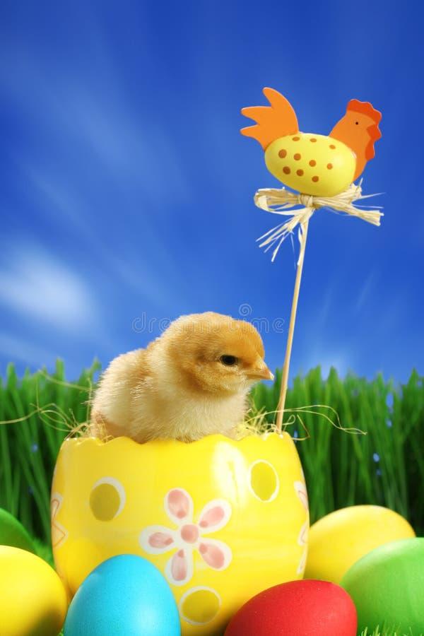 mały pisklęcy Easter zdjęcie royalty free