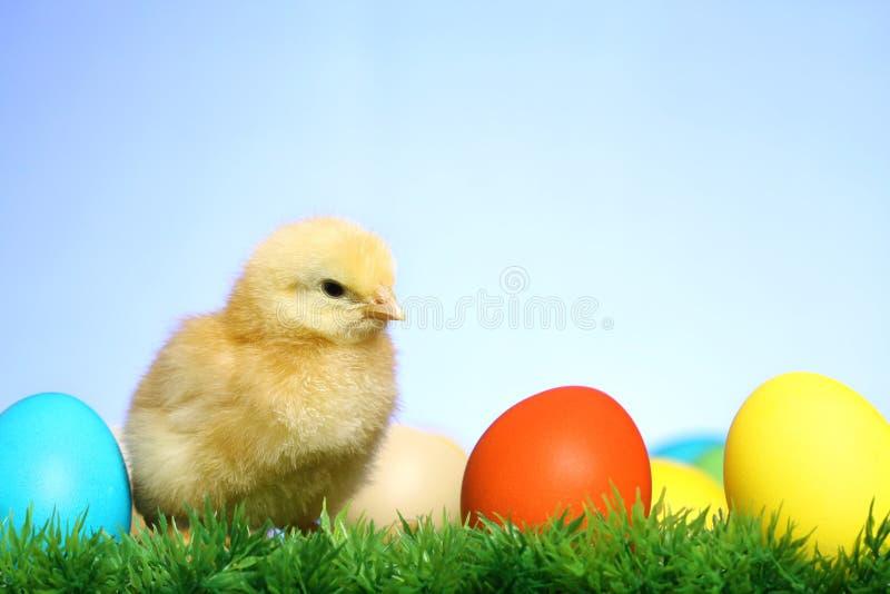 mały pisklęcy Easter fotografia royalty free