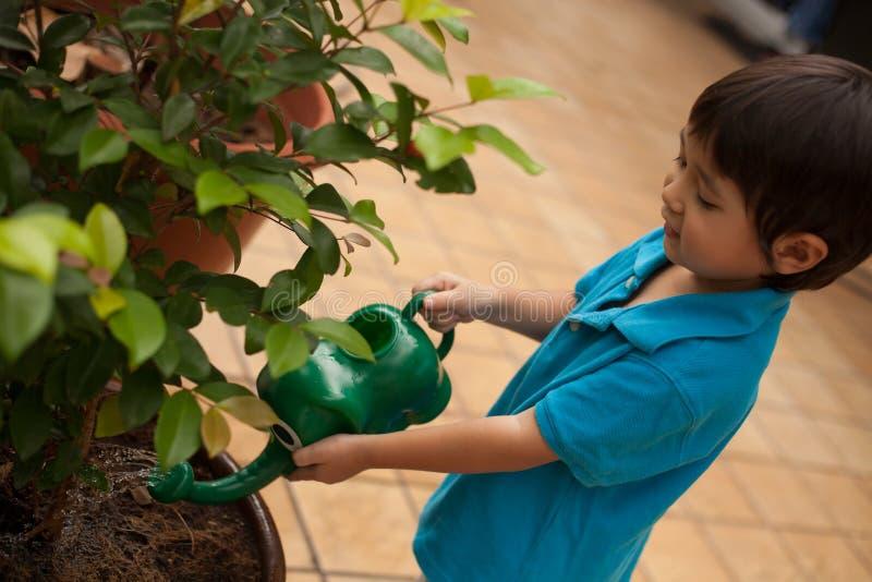 Mały podlewanie puszkująca dziecko roślina fotografia stock