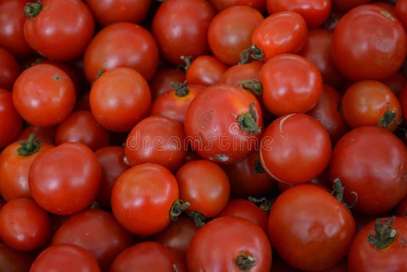 mały pomidora zdjęcie royalty free