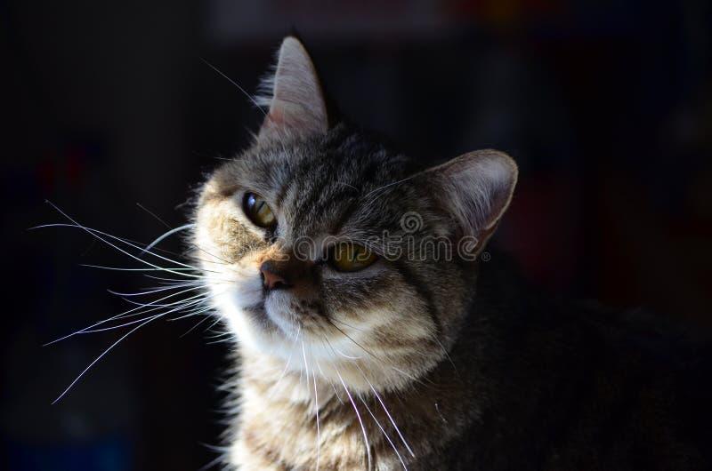 Mały princess, Susi Q fotografia stock