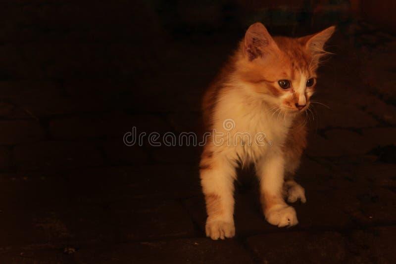 Mały prosiątko kot w poszukiwaniu domu fotografia stock