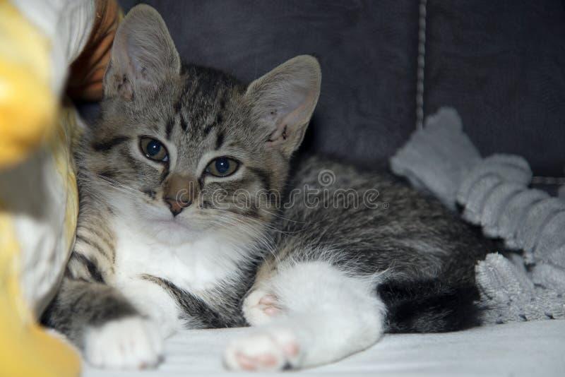 Mały przybłąkany kot domowy, teraz obraz stock