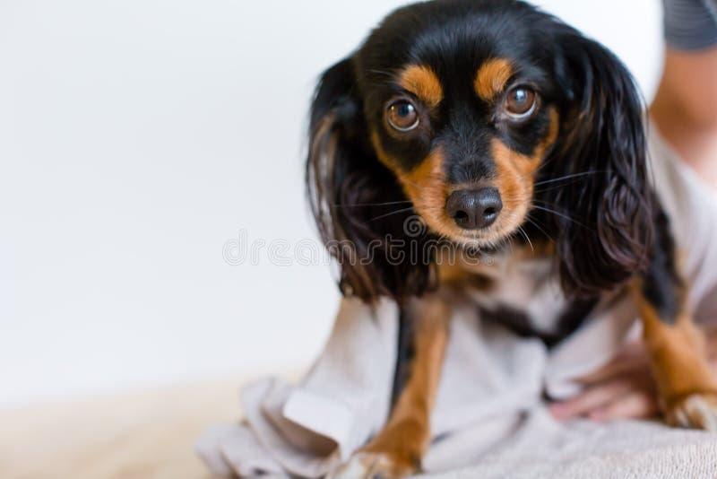 Mały psi przygotowywający mieć skąpanie obraz stock