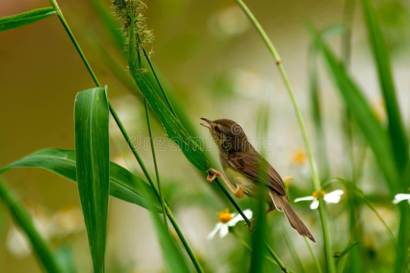 Mały ptak fotografia stock