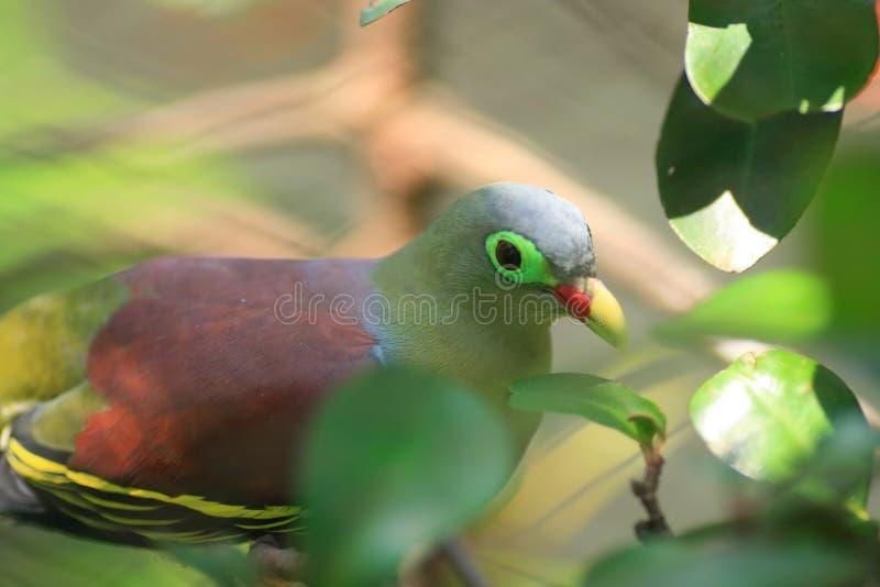 Mały Ptak Bezpłatne Zdjęcie Stock