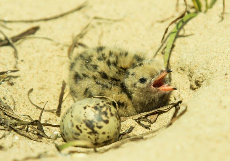 mały ptak zdjęcie royalty free