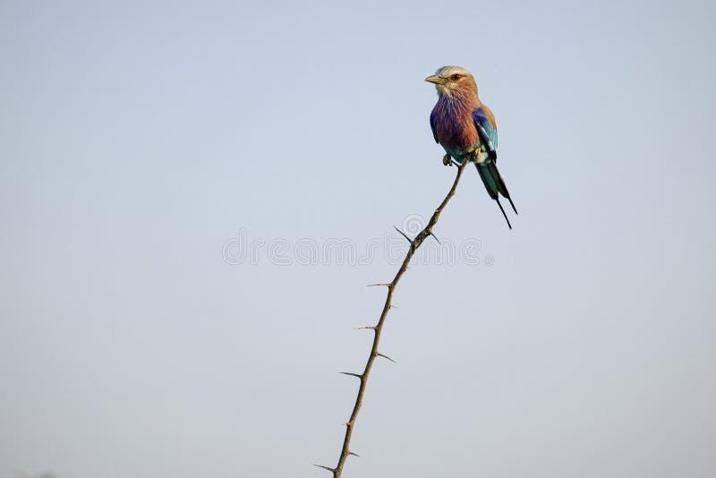 Mały ptak na górze gałąź fotografia royalty free