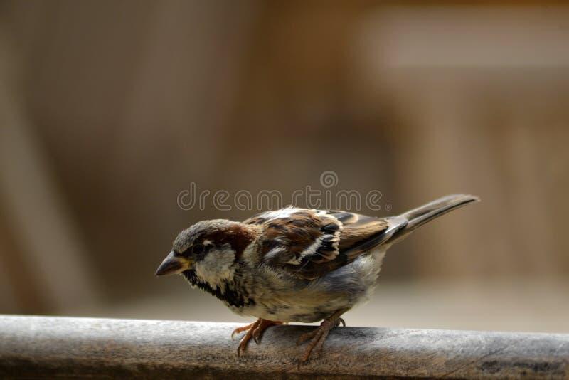 Mały ptak wokoło start fotografia stock