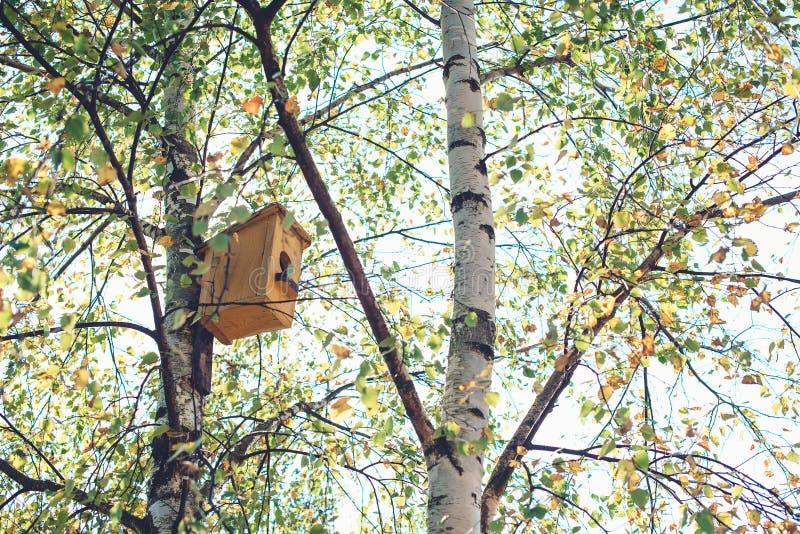 Mały ptaka dom na brzozy drzewie Ptasi dozownik w lasowym Ptasim dozowniku w jesień parku Cześć Wrzesień w kontekście niebieskie  zdjęcie stock