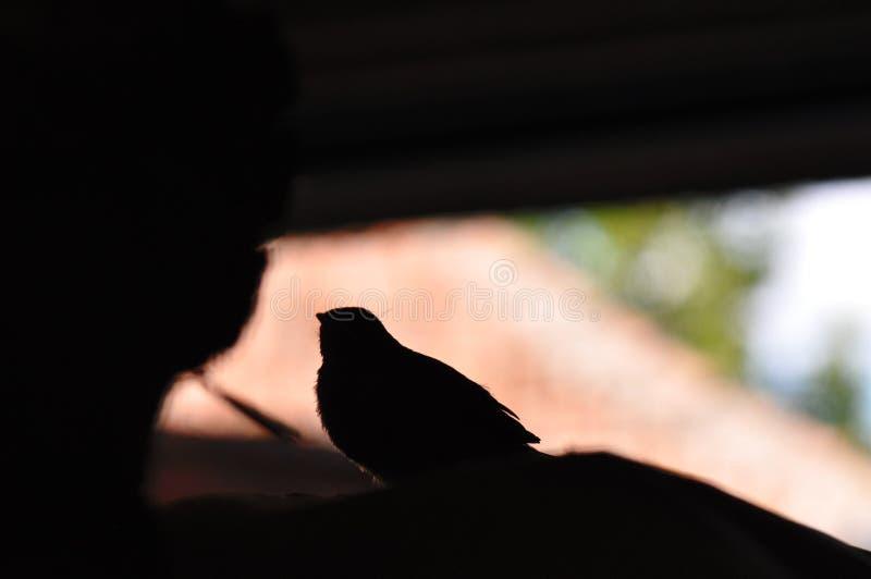 Mały ptaka profil fotografia stock